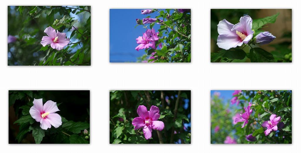 夏の花 夏の日の別れ_d0147812_161504.jpg