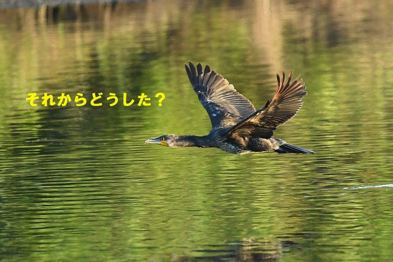 f0133213_20301057.jpg
