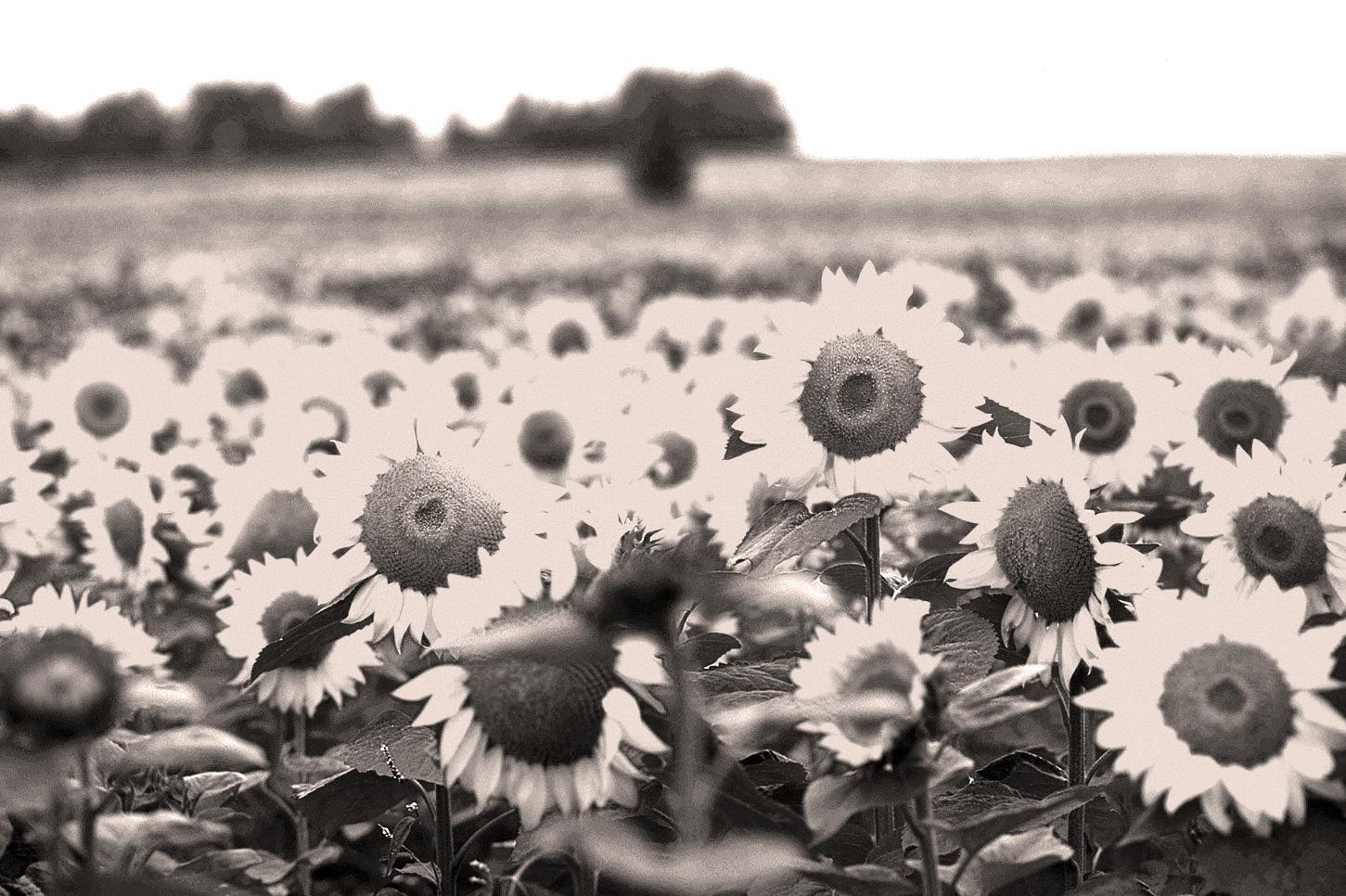 夏の記憶_c0181552_05475853.jpg