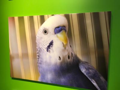 小鳥のアートフェスタ_b0194056_12534211.jpg