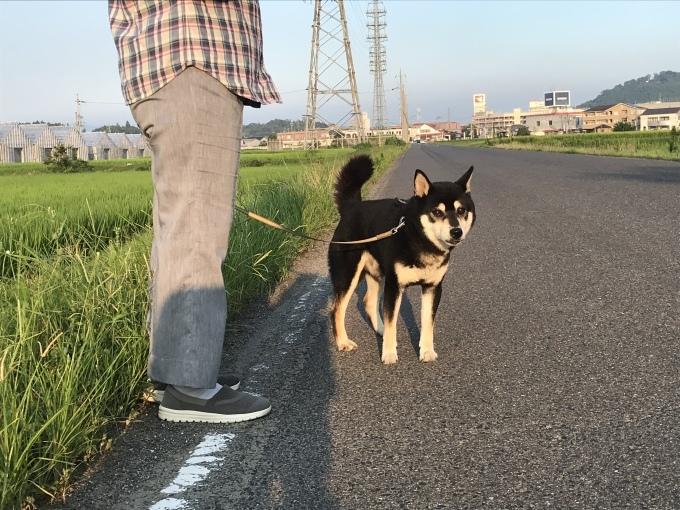 大阪からだんじり(地車)のたより_b0100062_18371648.jpeg