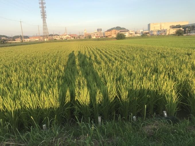 大阪からだんじり(地車)のたより_b0100062_18373084.jpeg
