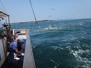 三河湾の観光漁業 漁師体験「まんが漁」_e0064783_05262676.jpg