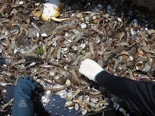 三河湾の観光漁業 漁師体験「まんが漁」_e0064783_05263519.jpg