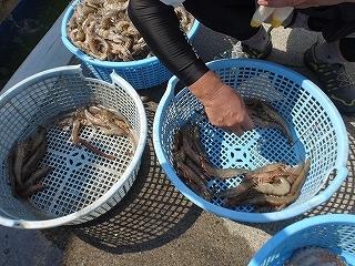 三河湾の観光漁業 漁師体験「まんが漁」_e0064783_05265339.jpg