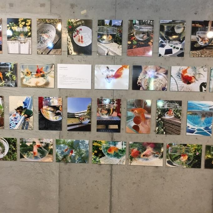 名古屋で「踊る金魚展」(^^)♪_e0385587_12031978.jpeg