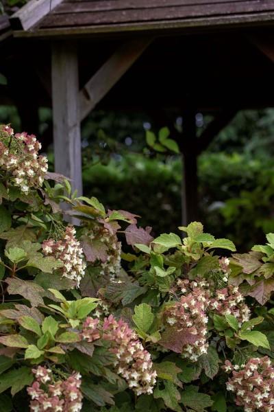 花菜ガーデン、未投稿分_e0305388_07065831.jpg