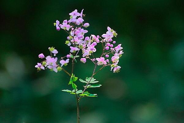 赤城自然園の夏の花_d0334291_16233290.jpg