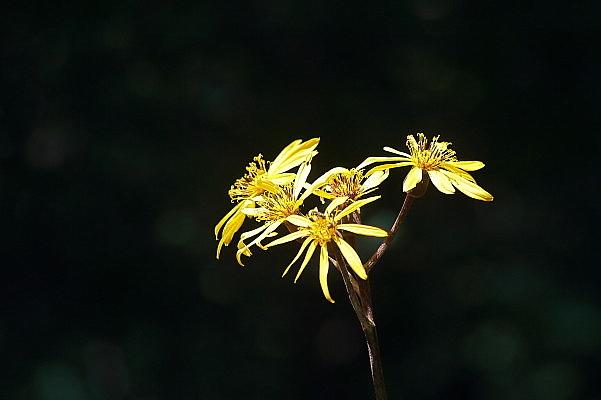 赤城自然園の夏の花_d0334291_16241509.jpg