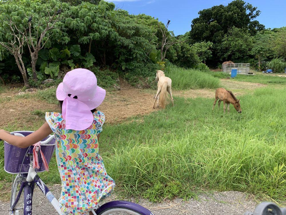 沖縄 5_d0098792_19340762.jpg