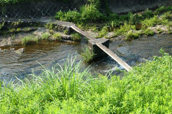 中ノ山の一本橋_b0145296_14051991.jpg