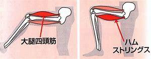 膝関節に問題がある方は…レッグカールで腿の筋肉を鍛えましょう_b0179402_10363735.jpg