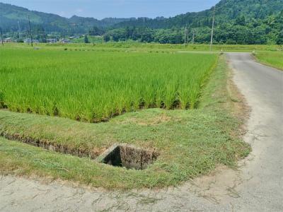 日曜の兼業農家は4回目の草刈り作業でした_c0336902_20362991.jpg