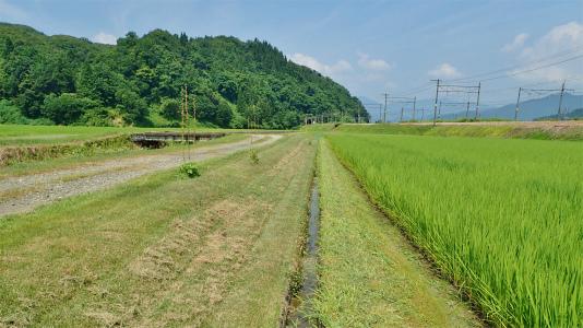 日曜の兼業農家は4回目の草刈り作業でした_c0336902_20363903.jpg