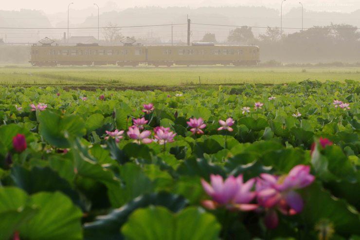 蓮の花が開く_d0309612_00191605.jpg