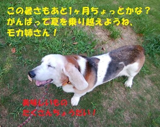 f0121712_16395906.jpg