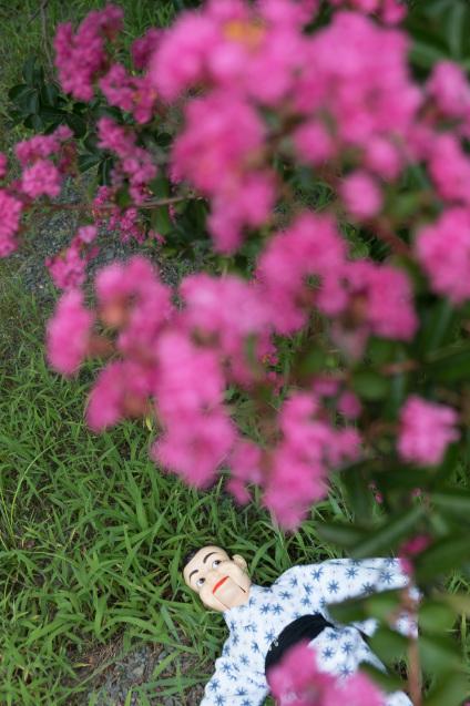 京都御所の鮮やかサルスベリ_e0369736_10361972.jpg