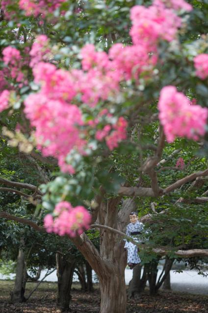 京都御所の鮮やかサルスベリ_e0369736_16571529.jpg