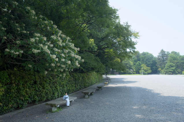 京都御所の鮮やかサルスベリ_e0369736_22264849.jpg