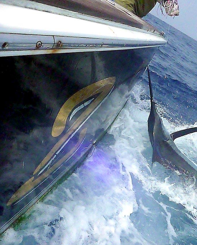 BZ艇さんが遠州灘でトータル5本_f0009039_17423783.jpg
