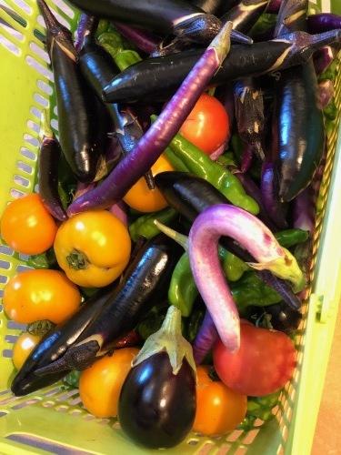 サンブーコの定植 防草シートの補強 夏野菜収穫  一息ついてお店にと思ったら_c0222448_16054527.jpg