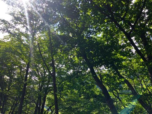 夏です!!_e0248949_20023824.jpg