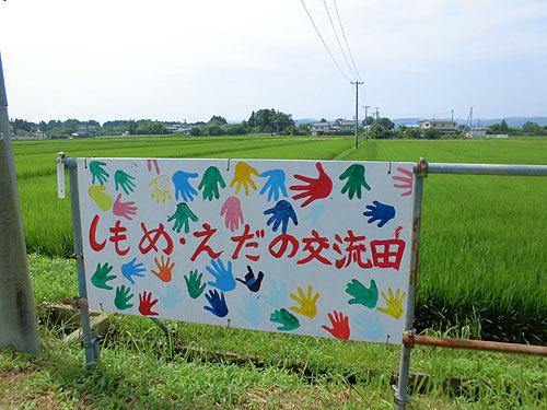 7月31日の田んぼ(下目黒小・枝野小) _d0247484_8174586.jpg