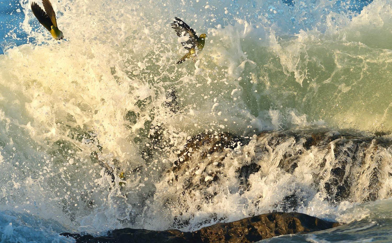 大磯:アオバトの波かぶり ②_e0362696_15210187.jpg