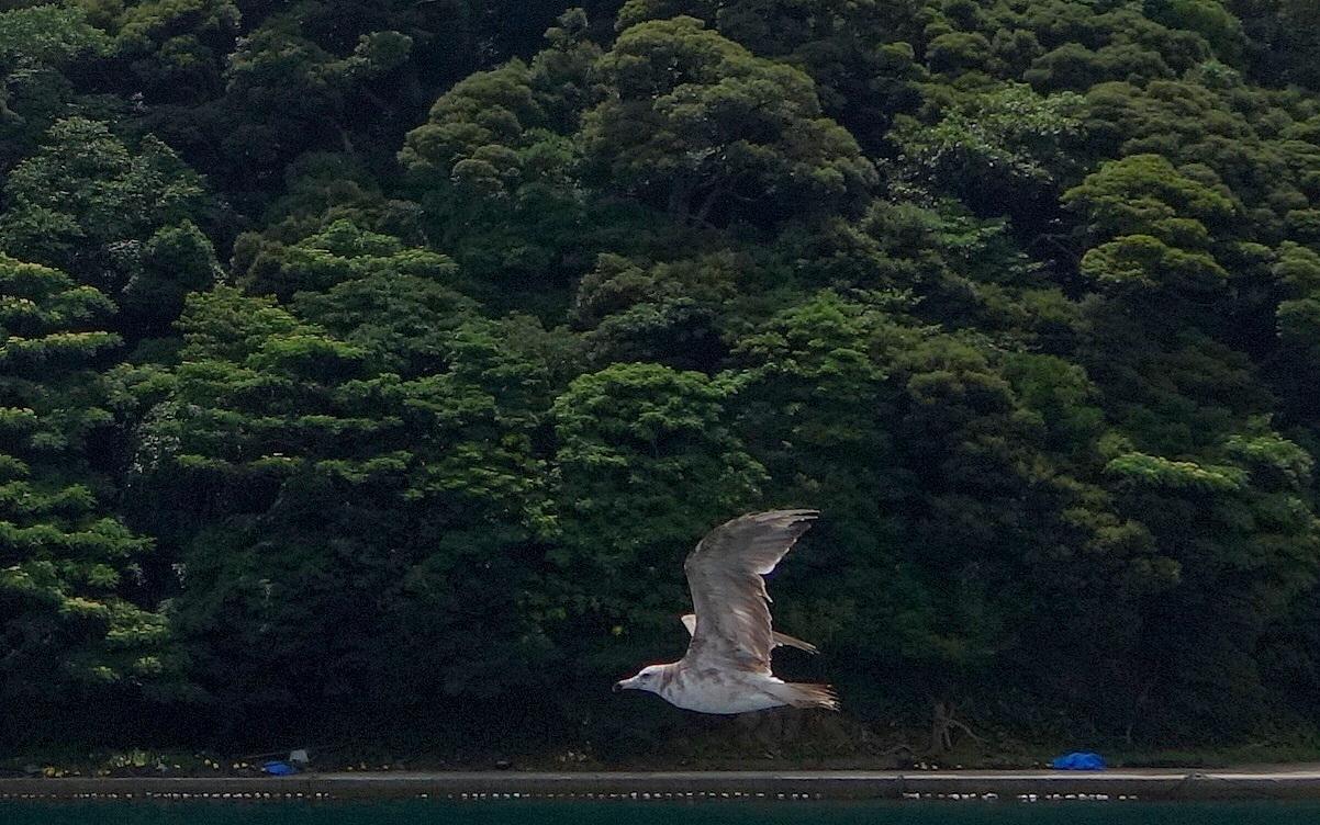 【京都】伊根湾_c0348200_22240190.jpg
