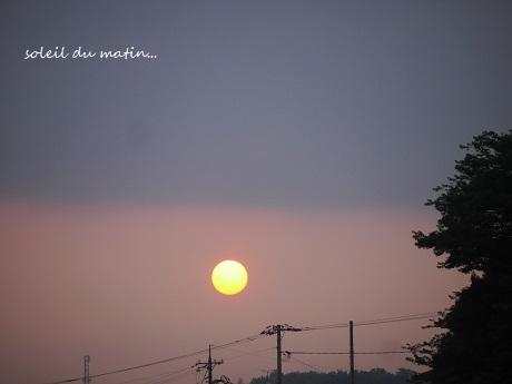 真夏の夜の夢の花・・・_c0098807_22110633.jpg