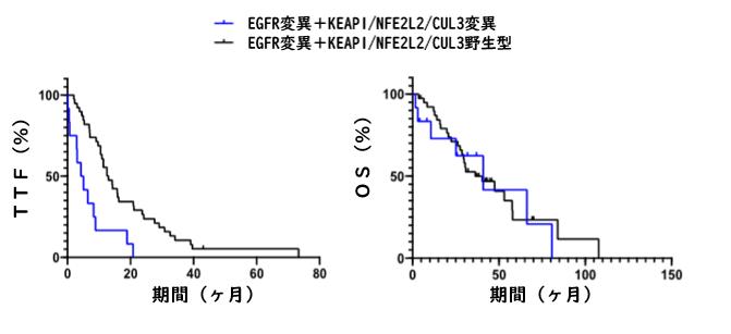 KEAP1/NFE2L2/CUL3変異はEGFR-TKI耐性に関与_e0156318_9353637.png