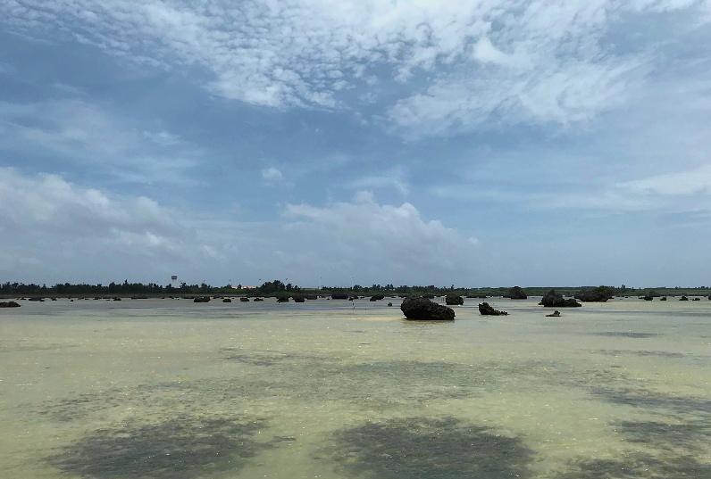南の島3日目「クロサギ」さん~Σ^)_e0218518_18224712.jpg