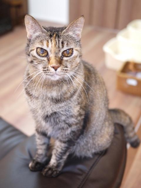 猫のお留守番 天ちゃん麦くん茶くん〇くんAoiちゃん編。_a0143140_21484238.jpg