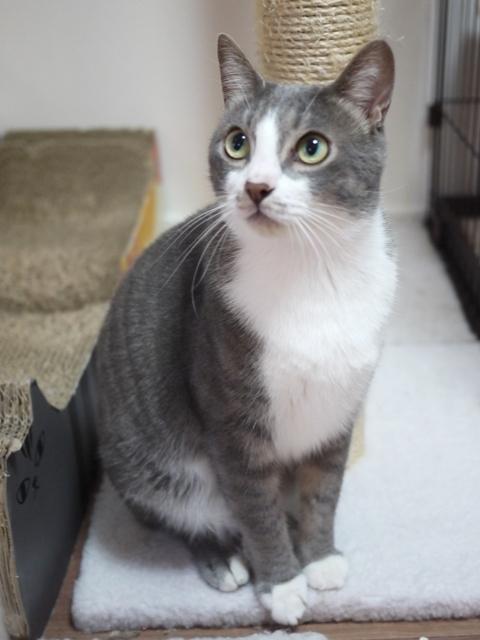 猫のお留守番 天ちゃん麦くん茶くん〇くんAoiちゃん編。_a0143140_21493502.jpg