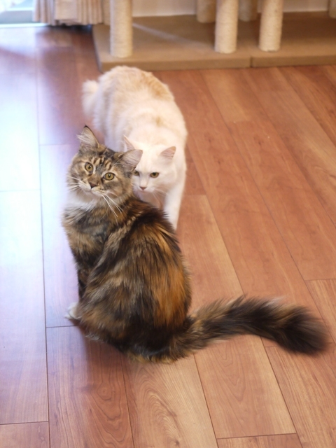 猫のお留守番 天ちゃん麦くん茶くん〇くんAoiちゃん編。_a0143140_21501701.jpg