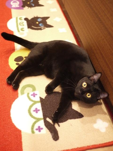 猫のお留守番 天ちゃん麦くん茶くん〇くんAoiちゃん編。_a0143140_21504640.jpg