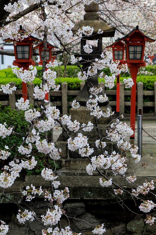 Finale!桜咲く京都2019 六孫王神社の桜たち_f0155048_22523411.jpg
