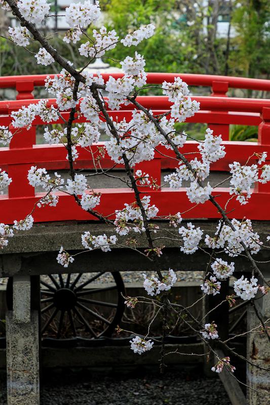 Finale!桜咲く京都2019 六孫王神社の桜たち_f0155048_22524120.jpg
