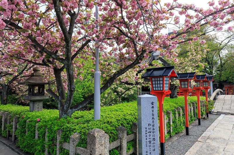 Finale!桜咲く京都2019 六孫王神社の桜たち_f0155048_22544247.jpg