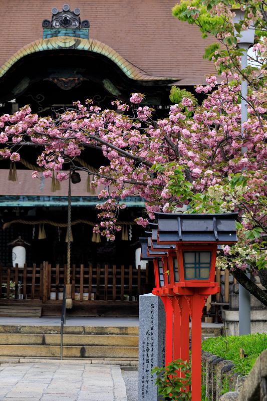 Finale!桜咲く京都2019 六孫王神社の桜たち_f0155048_2254673.jpg