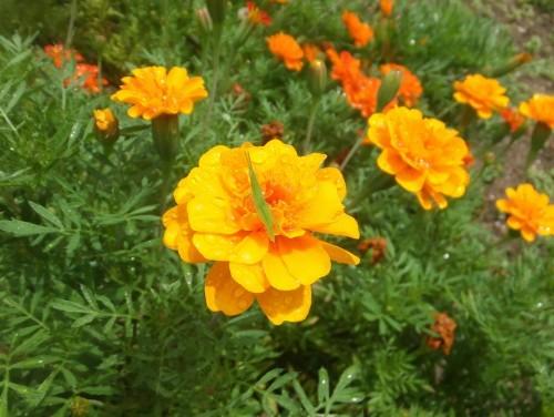 マイガーデン~夏の花たち_d0336460_22571502.jpg