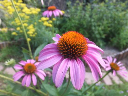 マイガーデン~夏の花たち_d0336460_23272708.jpg