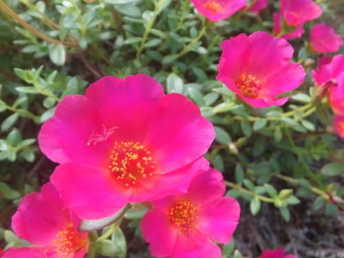 マイガーデン~夏の花たち_d0336460_23281990.jpg