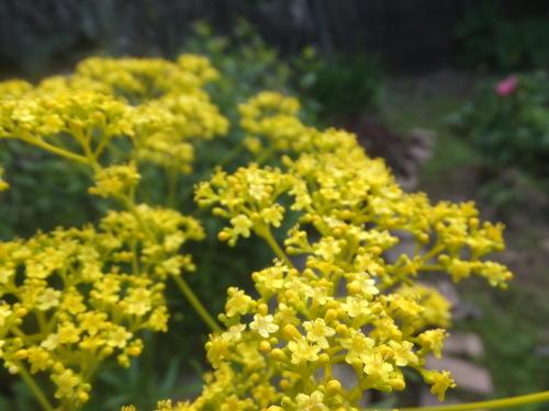 マイガーデン~夏の花たち_d0336460_23313332.jpg