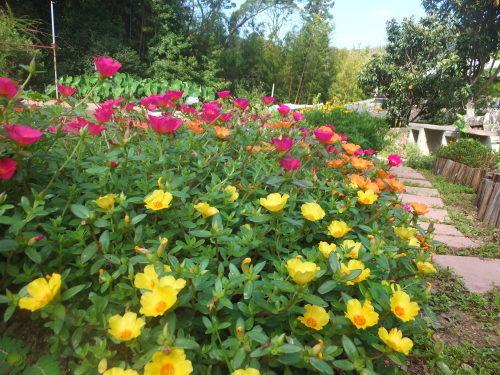 マイガーデン~夏の花たち_d0336460_23342106.jpg