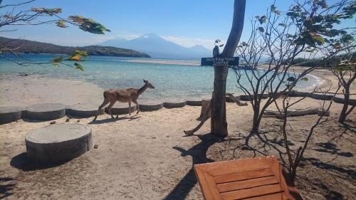 Menjangan island._d0156364_00344617.jpg