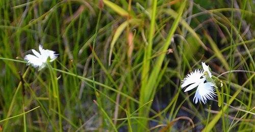 今年も丸山湿原でサギソウを見る_b0102572_09372175.jpg