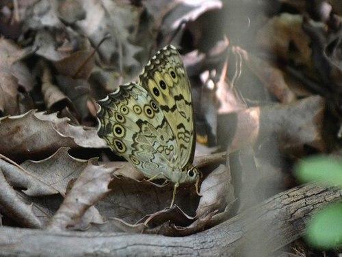 今年も丸山湿原でサギソウを見る_b0102572_09385629.jpg