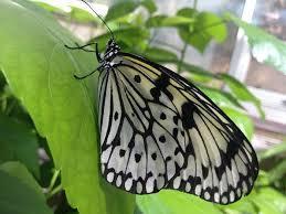 蝶が飛ぶには_d0339681_18080767.jpg