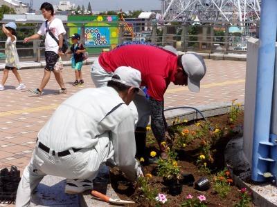 名古屋港水族館前花壇の植栽R1.8.7_d0338682_15594732.jpg